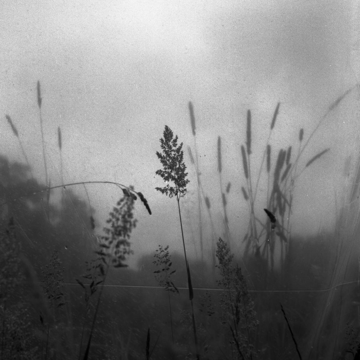 le-phaux-film1003